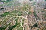 Lukisan  PT Sinar Mas di Hutan INDONESIA