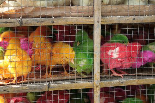 Foto via febri fahmi