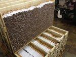 Pabrik rokok kudu, pabrik rokok, pabrik rokok sukun , pt sukun, sukun kudus016