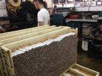 Pabrik rokok kudu, pabrik rokok, pabrik rokok sukun , pt sukun, sukun kudus017